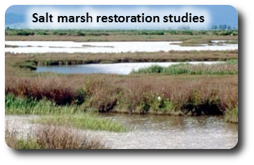 Northern California salt marsh